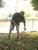Thumb_sn153863