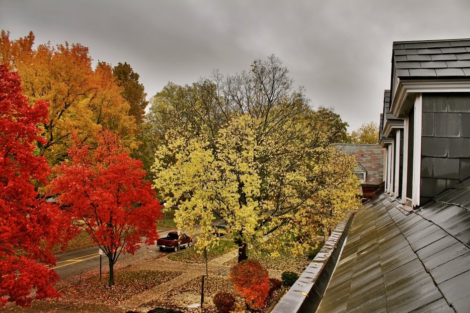 Colorful_trees_from_3rd_floor.JPG