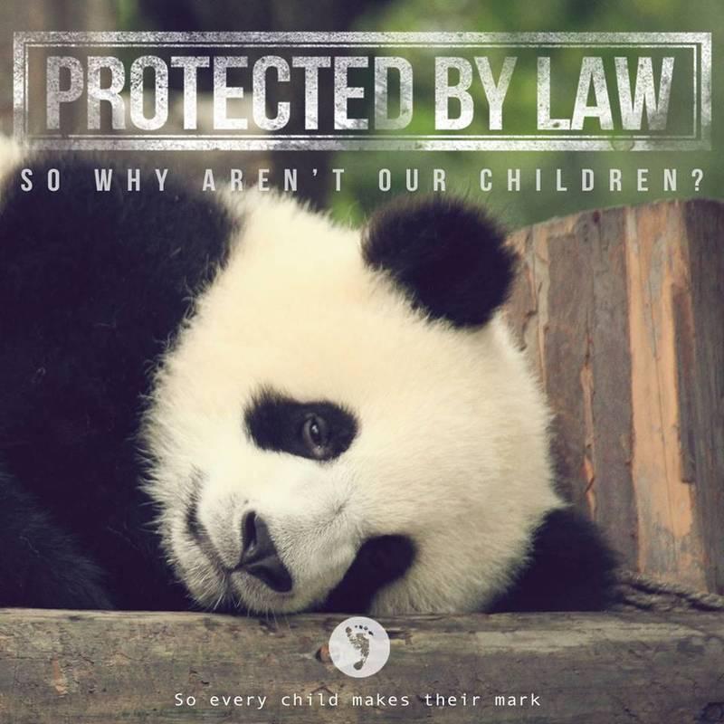 Panda_protection.jpg