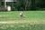 Thumb_sae_scde_2015_david_simone_softball_classic_-019