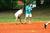Thumb_sae_scde_2015_david_simone_softball_classic_-035