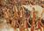 Thumb_ut_hc_1979_v_rutgers_-_cheerleaders_001